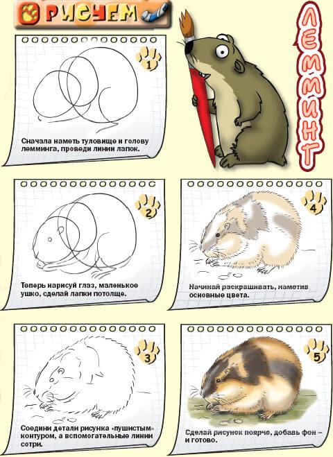 Как нарисовать Лемминга по этапах