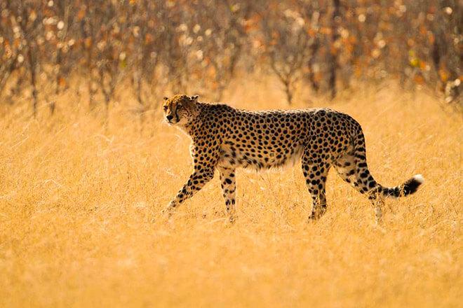 15 самых быстрыхсухопутных животных