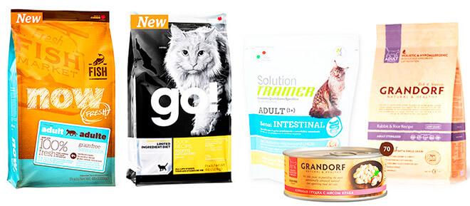 Чем кормить кошку: сухой корм или влажный?