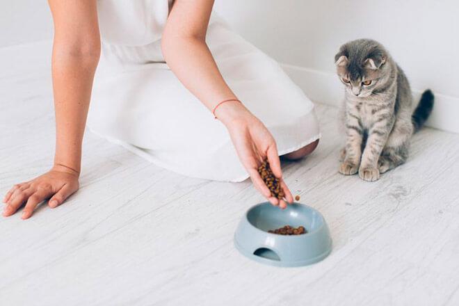 Корм для котенка