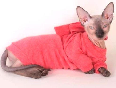 Виды одежды для котов