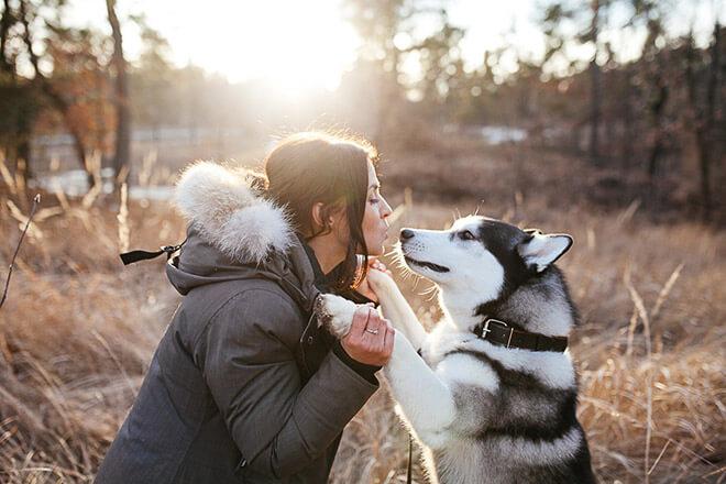 Собачий возраст
