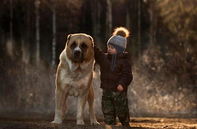 Порода собаки Алабай