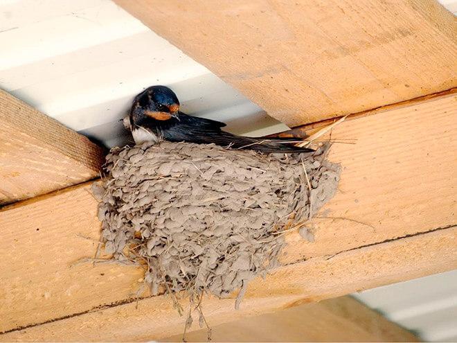 Повадки гнездовых