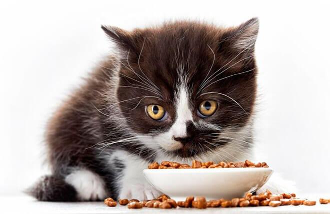 Как приучить месячного котенка есть самостоятельно?