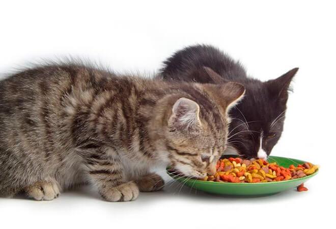 Какими продуктами можно кормить котенка