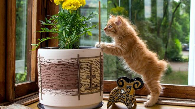 Легкие клички для кошки