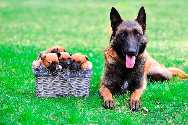 Имена для собак-мальчиков по алфавиту