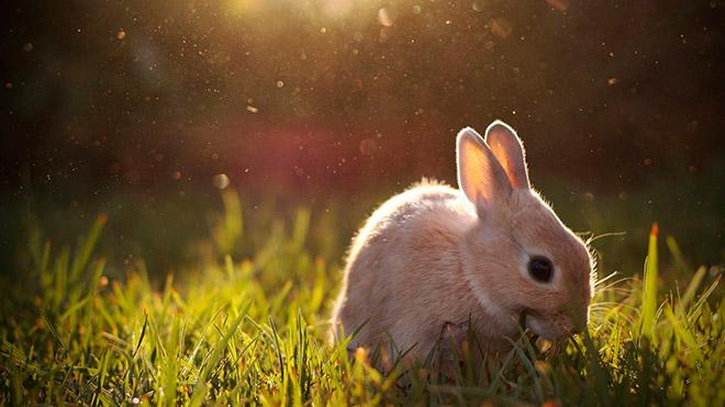 Что же любит кушать кролик?