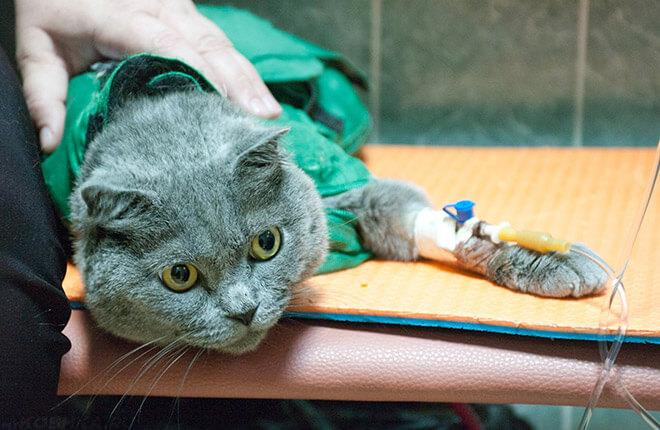 Почему у кошки появилась шишка на теле