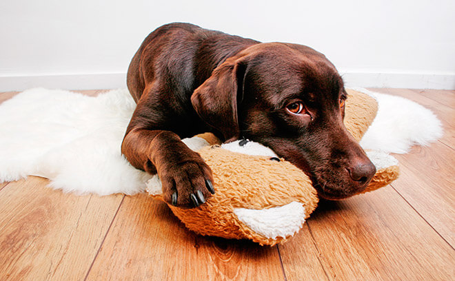 Собаку тошнит, что делалть?