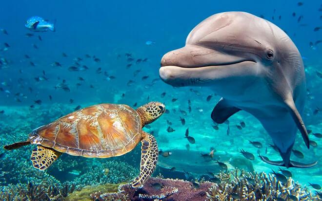 Относяться ли дельфины к разряду млекопитающие?
