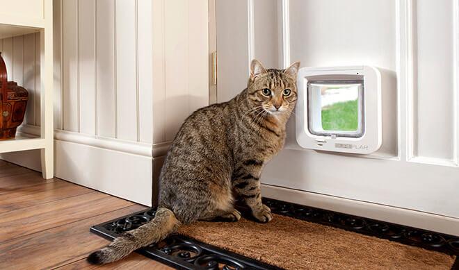 Дверца для кошки, как выбрать?