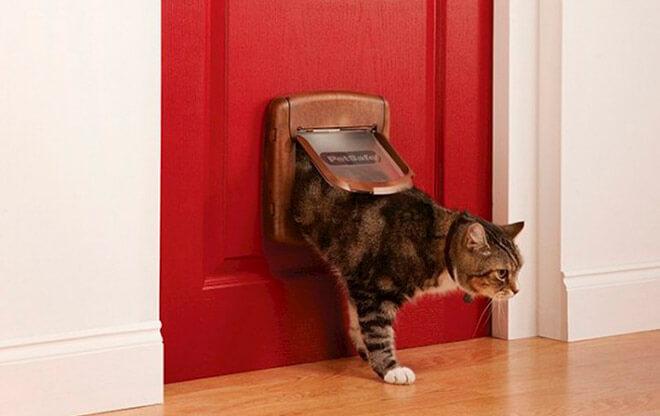 Кошка проходит в дверцу