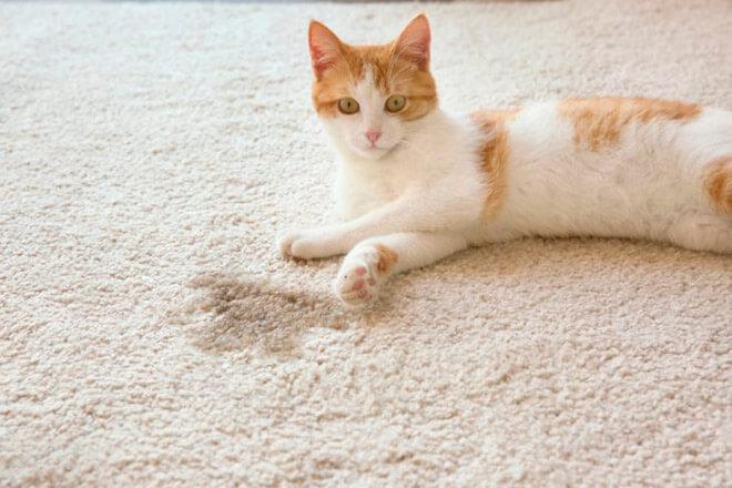 Эффективное средство от запаха кошачьей мочи || Средство от кошачьего запаха