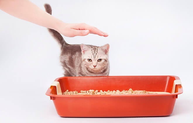 Учим котенка ходить на лоток
