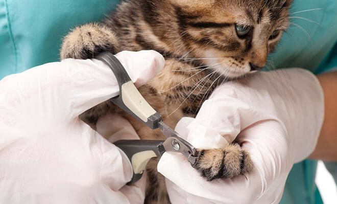 Как обрезать ногти кошке?