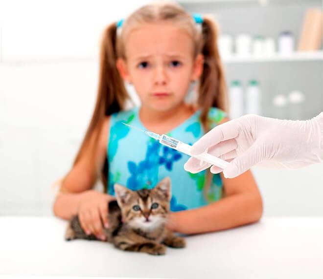 От каких болезней кошек есть вакцины?