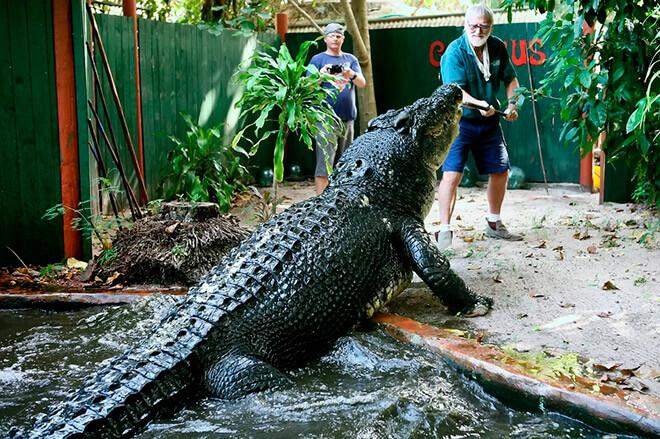 Самая большая рептилия в мире