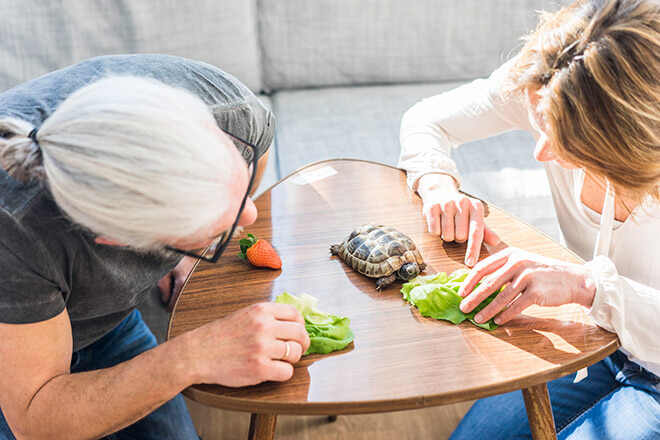 Черепаха кушает