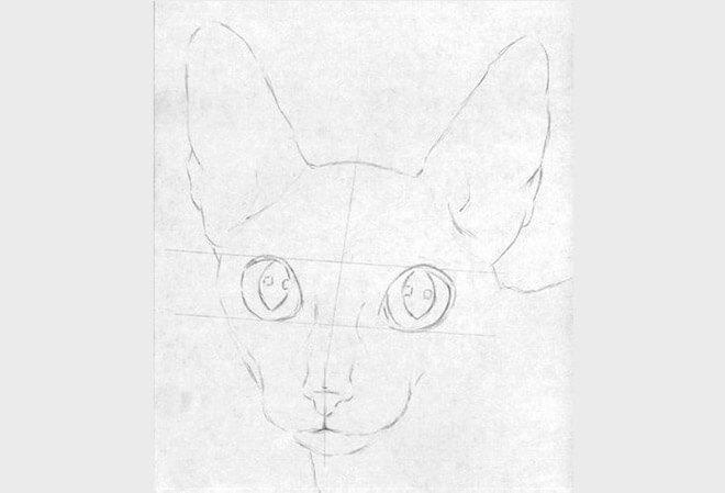 Как нарисовать портрет домашнего кота