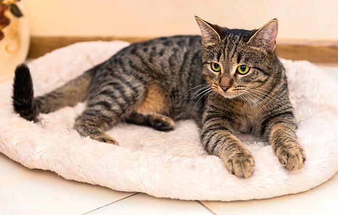 Как сделать лежак для кошки своими руками
