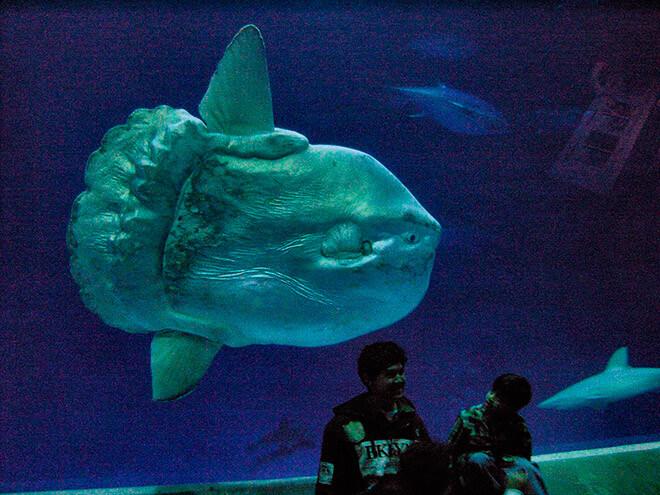 Самая большая костистая рыба в мире