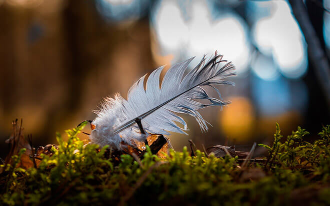 Перья дикой птицы