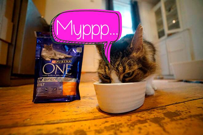 Обзор корма для кошек Purina One