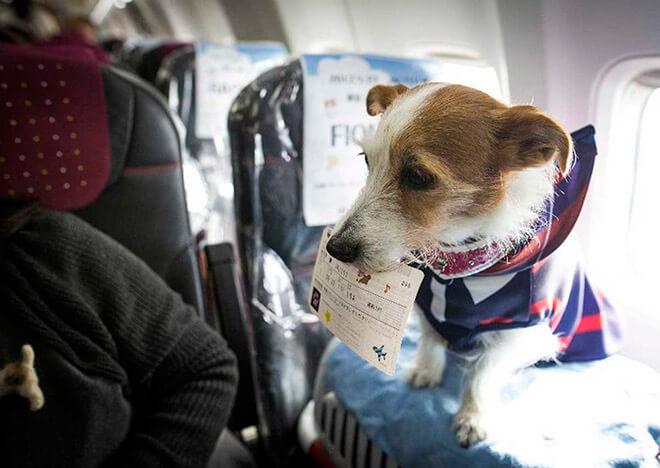 Как подготовиться к путешествию на самолете с собакой?