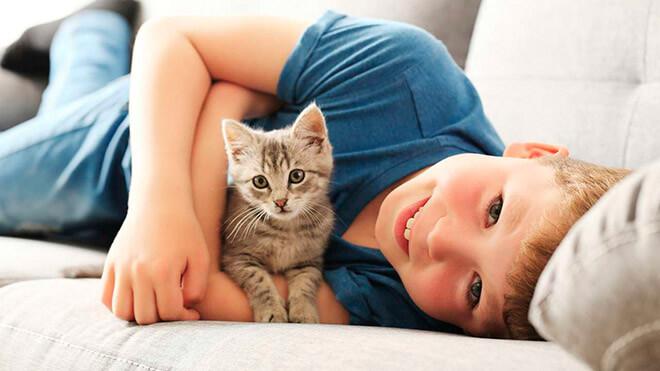 Какую породу кошки выбрать для ребенка?