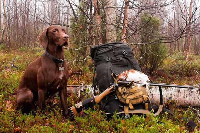 Топ лучших охотничьих пород собак на планет