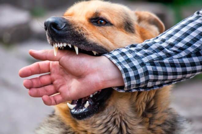 Что значить если приснилось что вас укусила собака за руку?