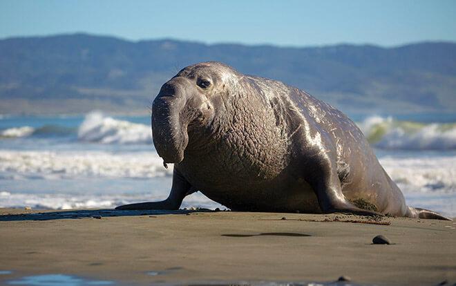 Самые большие плотоядные животные в мире