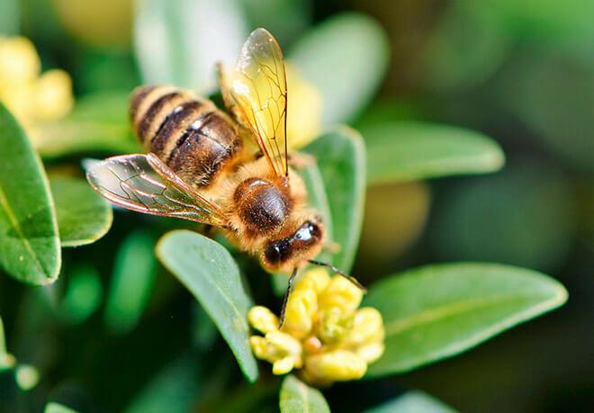 Чем питаются пчелы