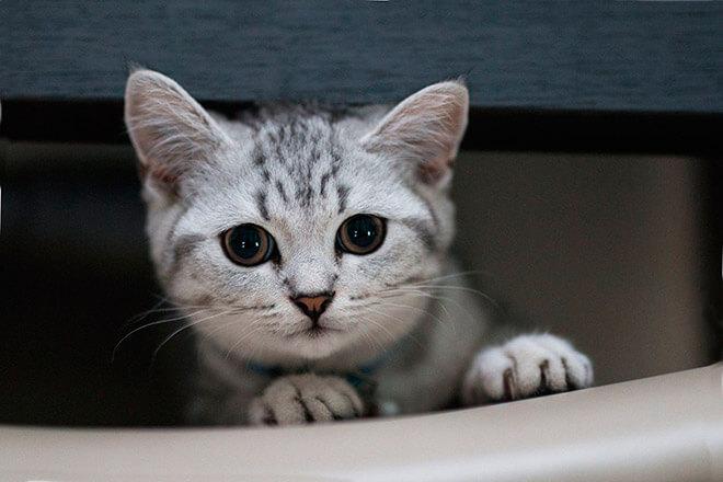Клички для котов британской породы