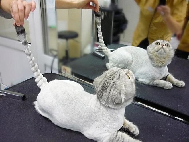 Модельная стрижка кошек