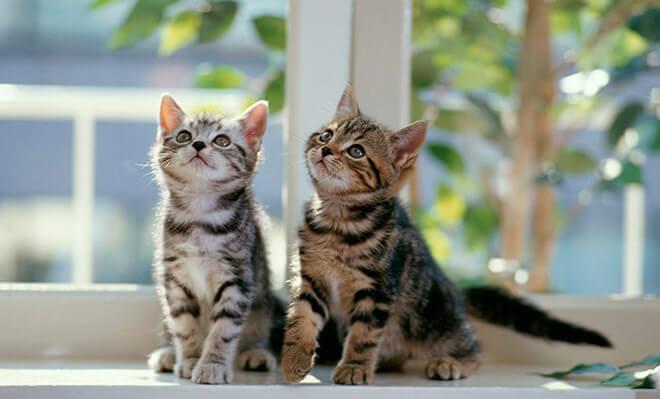 Порода кошки, как узнать?