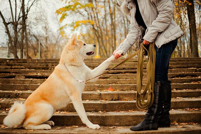 Японские клички собак