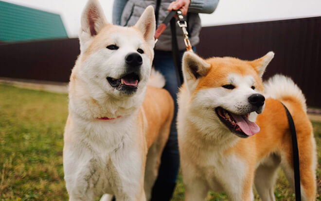Японские клички собак мальчиков