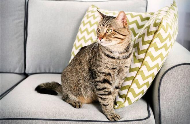 Чистка мягкой мебели от кошачьей мочи