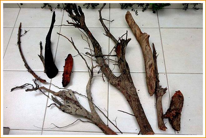 Обработка иобеззараживание коряги