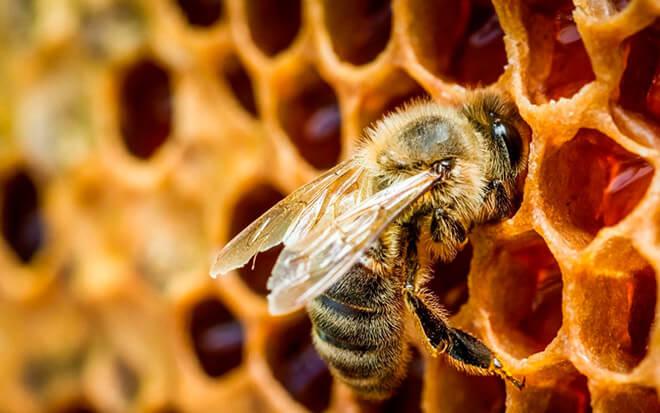 Несколько фактов о пчелах