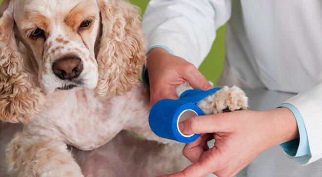 Лечение перелом лап у собак в домашних условиях thumbnail