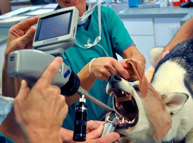 Варианты лечения собаки
