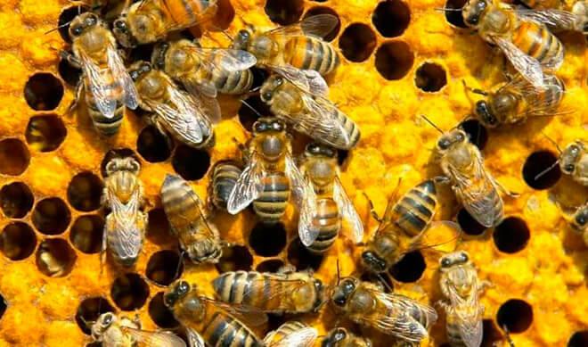 Где живут пчелы