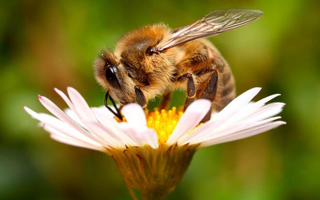Образ жизни пчел
