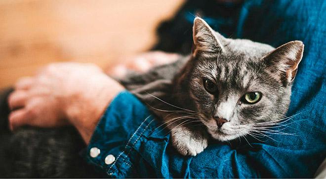 10 гипоаллергенных пород кошек