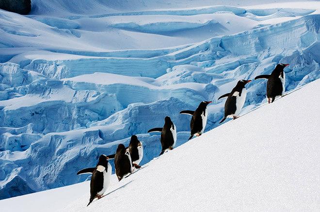 Животные Антарктики