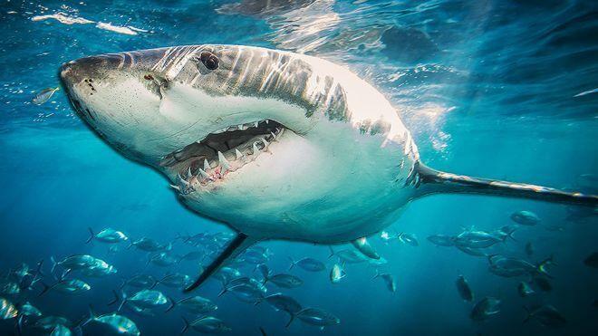 Акулы - не млекопитающие